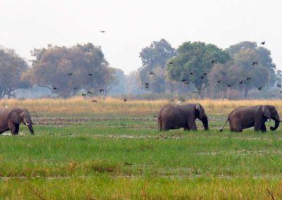 background-elephant